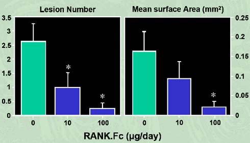 Figure 6: RANK-Fc inhibits the development of osteolytic lesions in myeloma-bearing mice (adapted from Oyajobi et al, 2005).