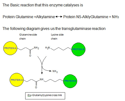 geobacter sulfurreducens potential to encode transglutaminase