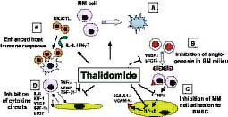 Figure 3: Pathways of thalidomide activity against multiple myeloma in the host microenvironment (adapted from Richardson et al, 2004).